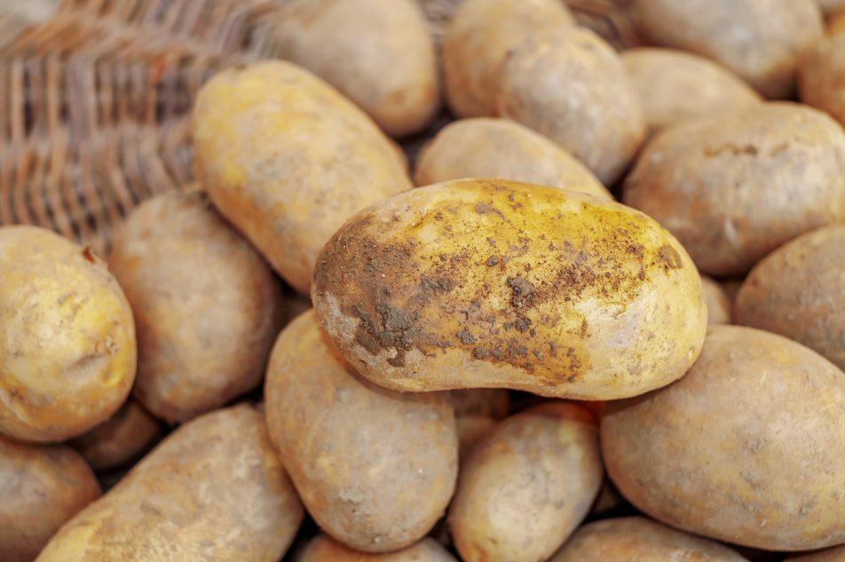 Ziemniak zwyczajny