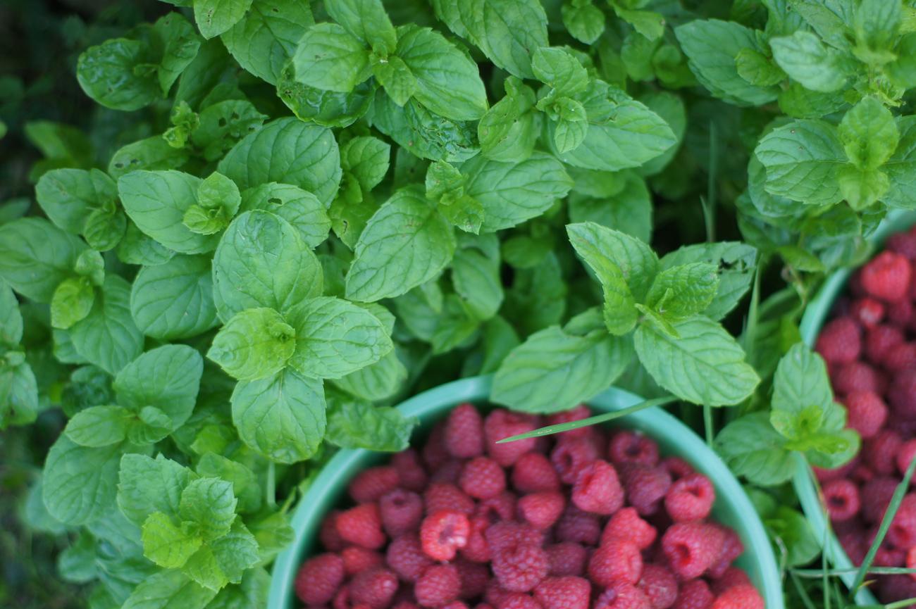 Zdrowa Kuchnia - sprawdzone przepisy kulinarne